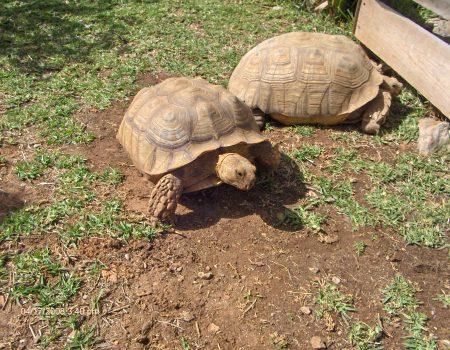 Krazy World Zoo Algarve